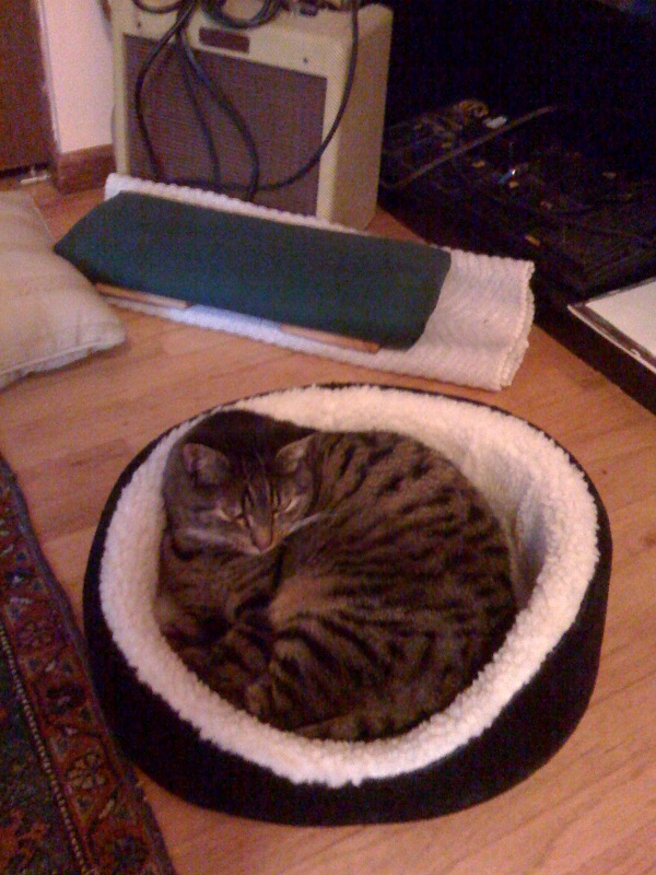 I'm so ridiculously pleased to have a cat who actually sleeps in her cat bed