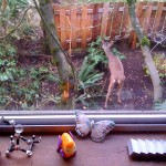 Mama deer outside Devise's studio window