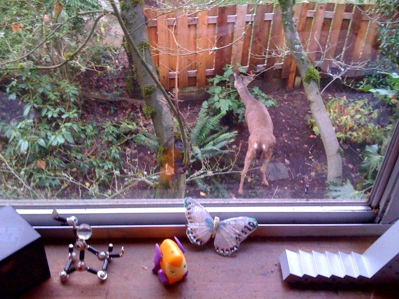 Mama deer outside Devise's studio window