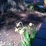 Spring appears to have sprung in our Portland backyard