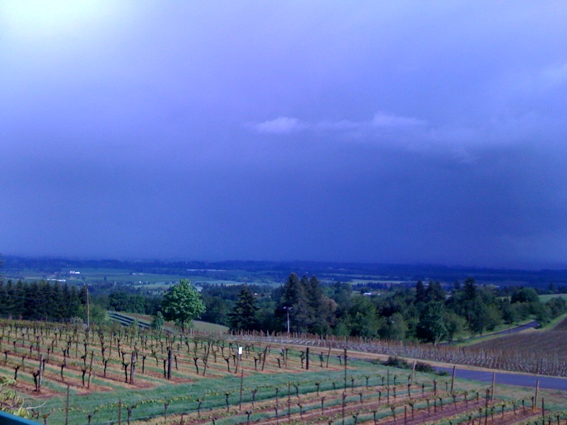 Vista from our winery/B&B/10th-anniversary-getaway room, shhh