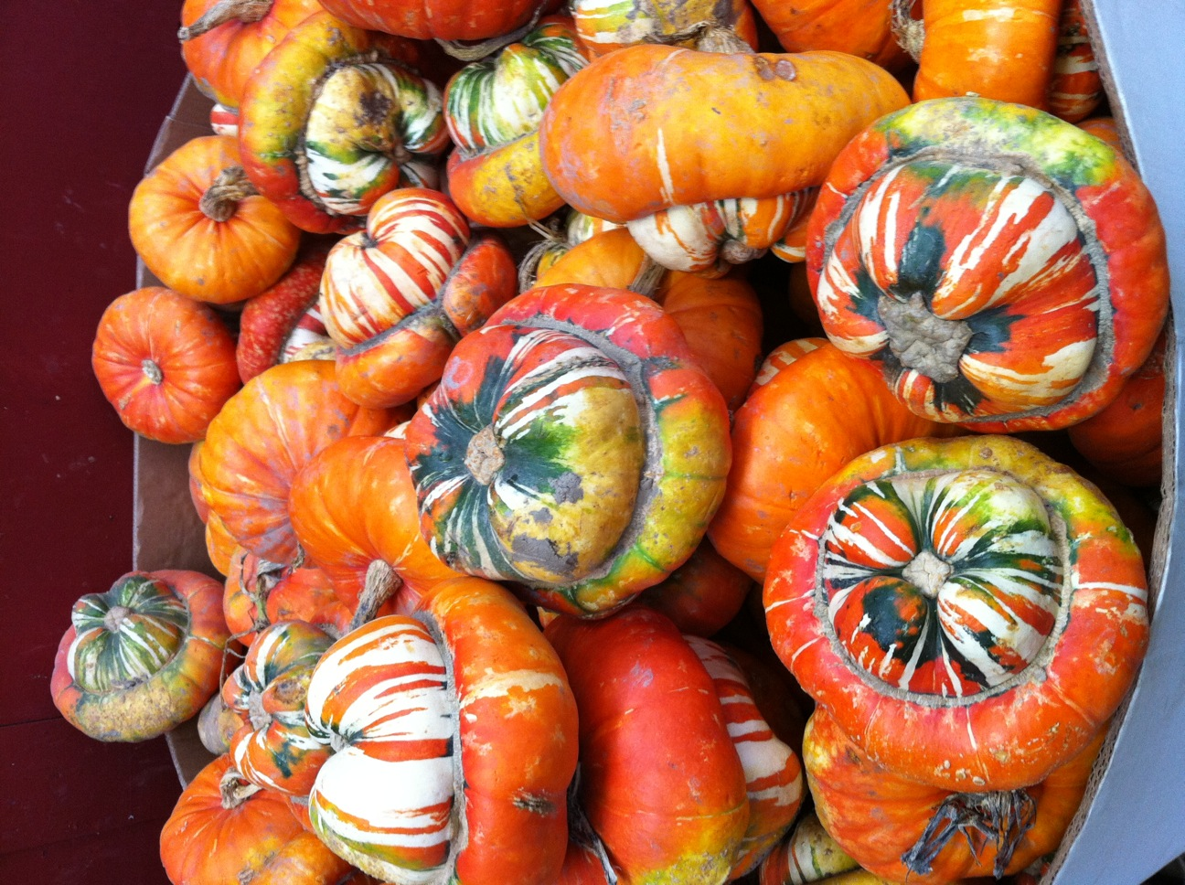 I think these turban squash grew in a mushroom patch, if you know what I mean