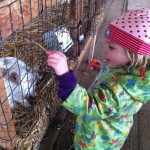 E enjoys encountering a bunny at the Sauvie Island Pumpkin Patch