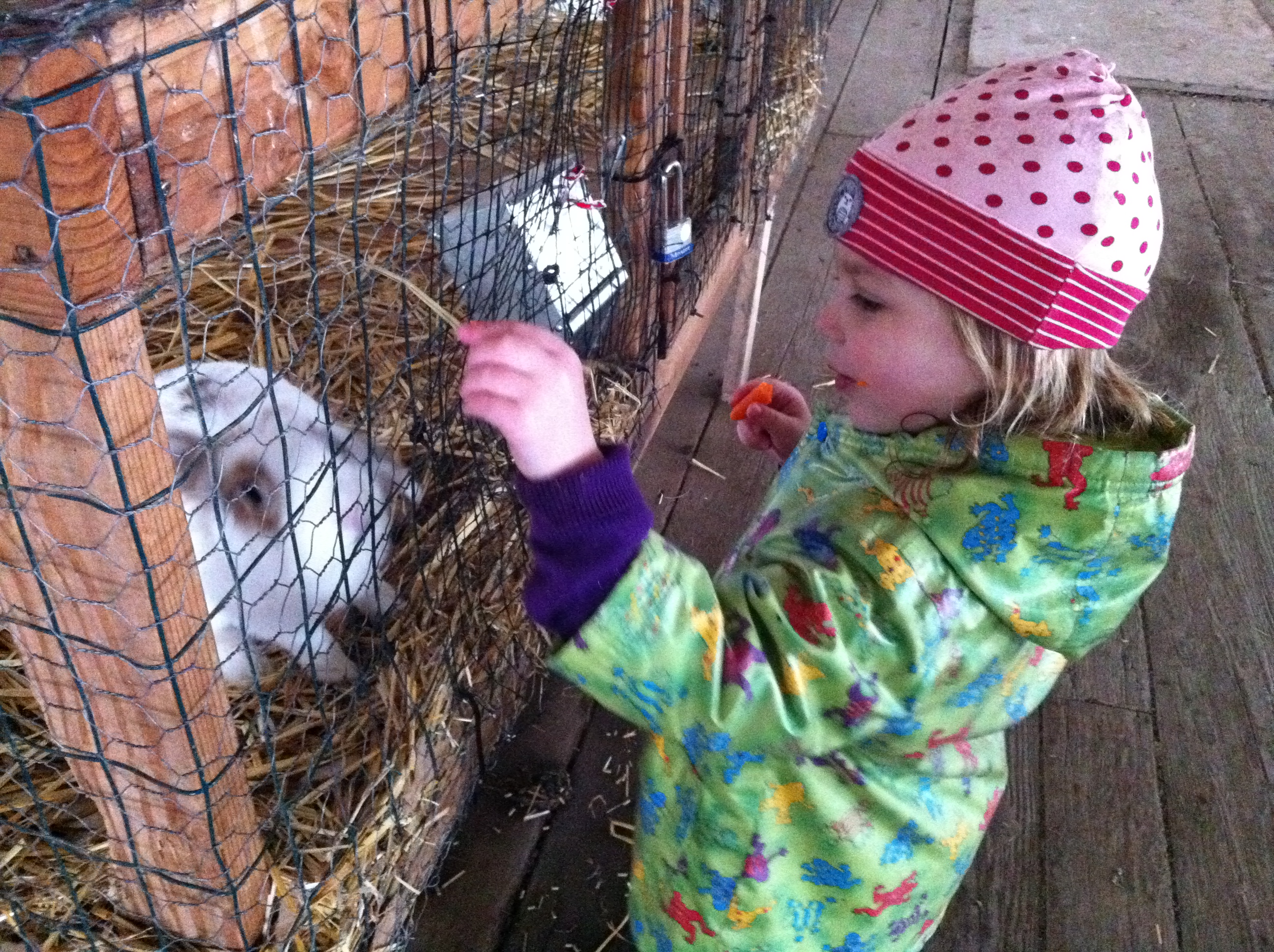 E enjoys encountering a bunny at the Sauvie Island Pumpkin Patch